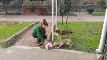 Tarsus Belediyesi, sokağa çıkma yasağında sokak hayvanlarını unutmadı