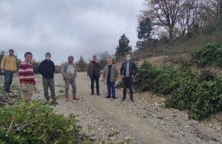 Türkeli'de toplanan defne yaprağı ek gelir sağlıyor