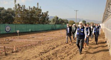 Türkiye'de İlk Kez Buğdayın Kromozomu Tespit Edildi