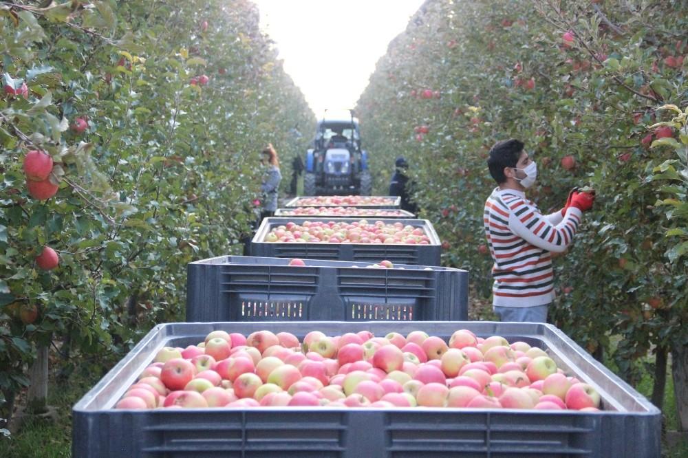 Karaman'da Son Elma Hasatı da Yapıldı