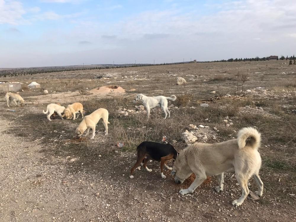 Vatandaştan 'Bu köpeklere biri baksın' çağrısı