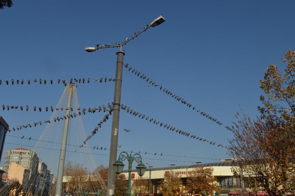 Yerde yem bulamayan güvercinler tellere dizildi