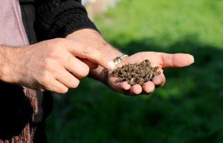 Adana'da arı ölümleri