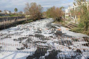 Antalya'da binlerce balığın ölümüyle ilgili 4 tesise ceza