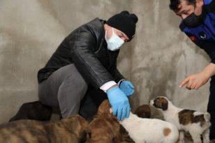 Başkan Bıyık, karda sokak hayvanlarını besledi