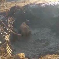 Bingöl'de çamura saplanan inek kurtarıldı