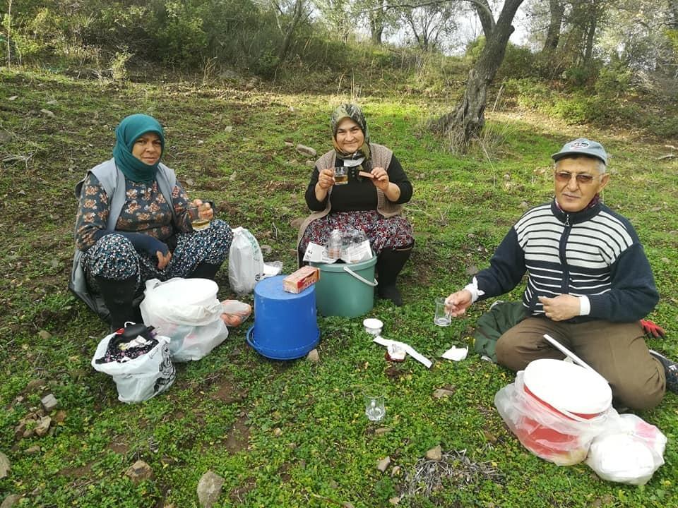 Burhaniye'de zeytin yaprağı çayı içiliyor