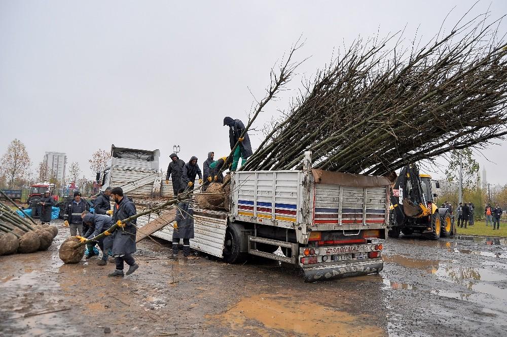Diyarbakır Büyükşehir Belediyesi 220 günde 5 bin ağaç dikti