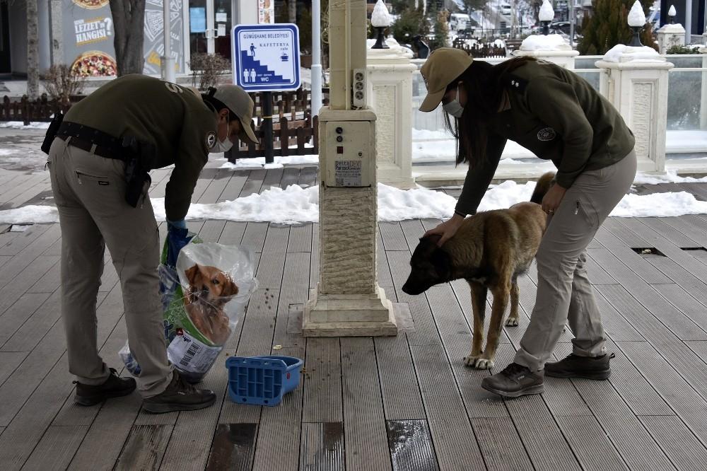 Gümüşhane'de sokak hayvanları kısıtlamada aç kalmayacak