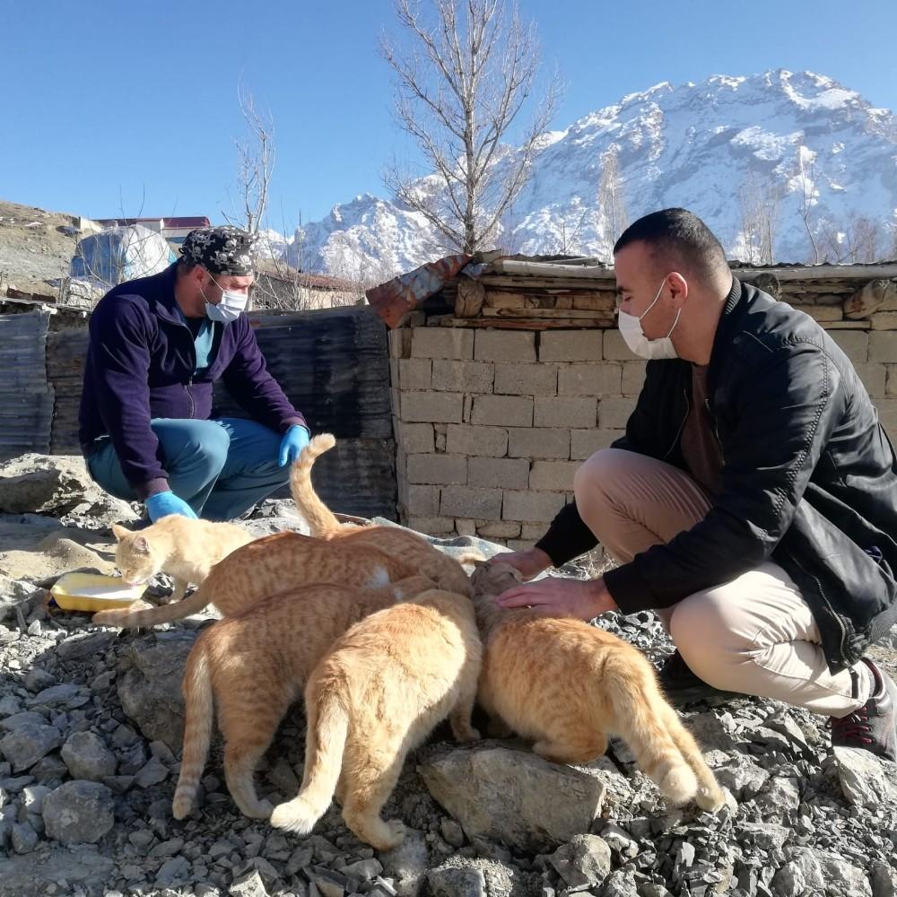 Hakkari'de sokak kedileri sevgiyle besleniyor