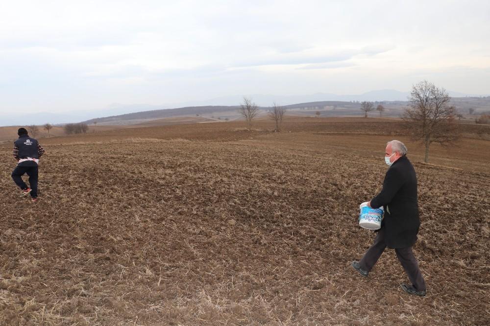 Havza Belediyesi'nden ata tohum ekimi