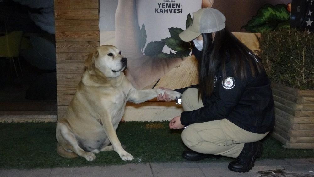 Uşak HAYDİ Ekibi Sokak Hayvanlarıyla Yeni Yıla Girdi