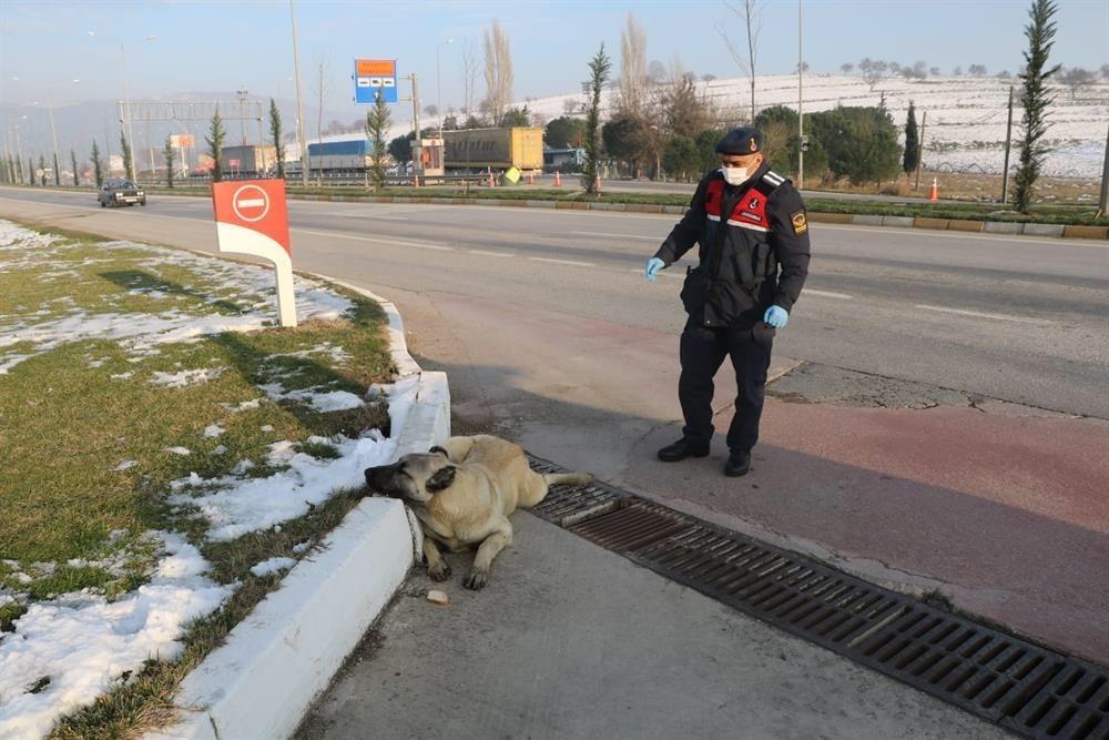 Jandarmadan Yaralı Köpeğe Yardımeli
