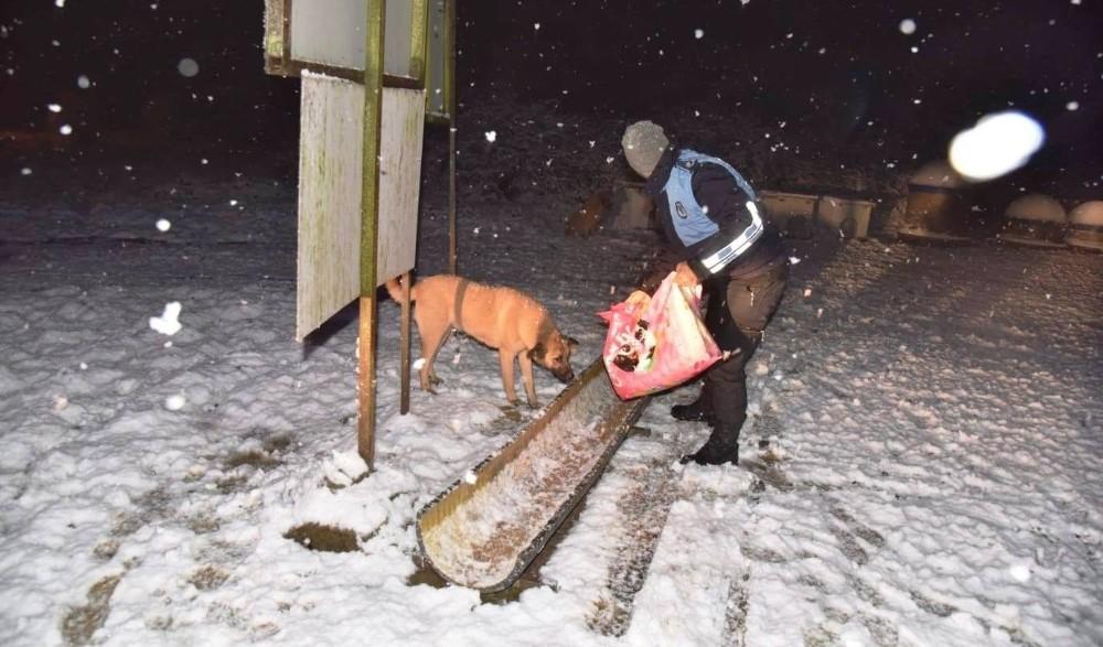 Kartepe Belediyesi sokak hayvanları için tüm önlemleri aldı