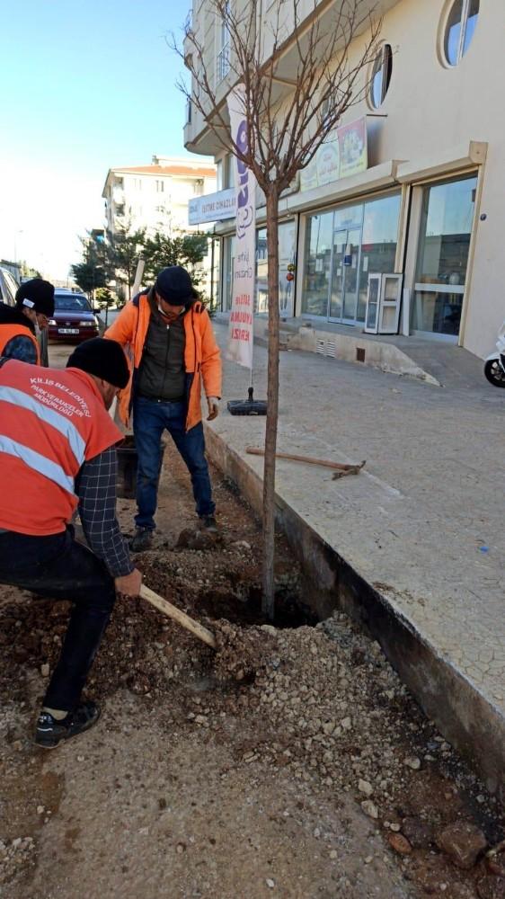 Kilis'te Semaver Yakmak İçin Kesilen Ağacın Yerine Yenisi Dikildi