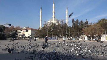 Kırıkkale'de kısıtlama mağduru güvercinleri gazeteci besledi