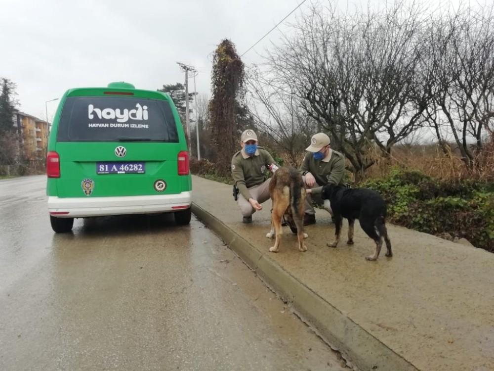 Kısıtlamada sokak hayvanlarını beslediler