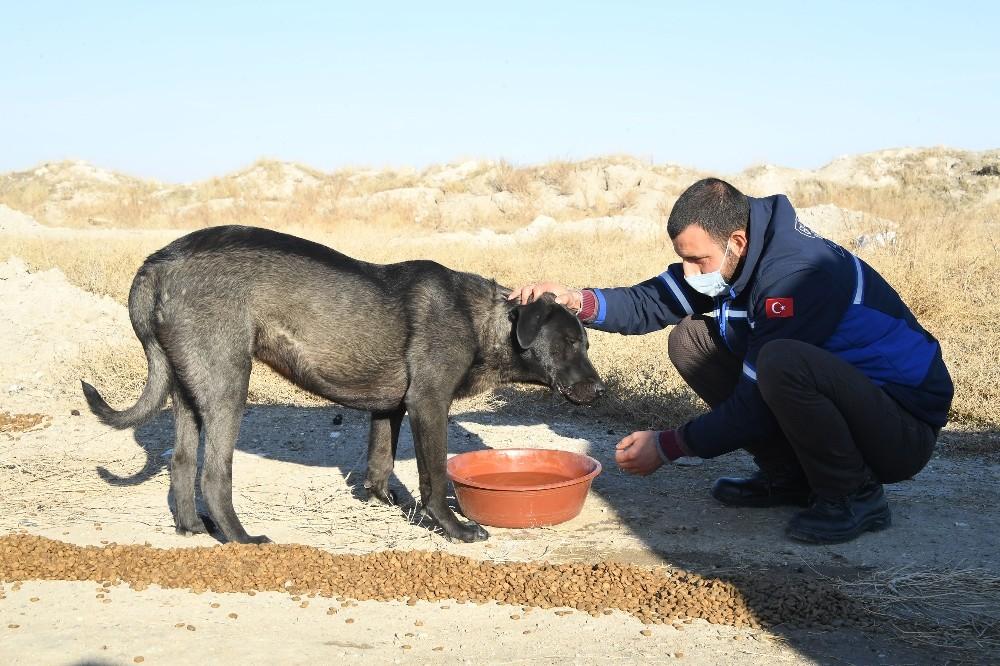 Konya Büyükşehir sokağa çıkma kısıtlamasında sokak hayvanlarını unutmadı