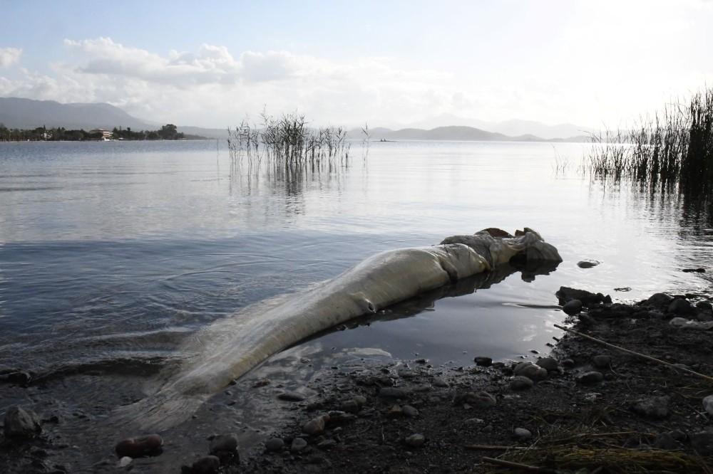 Köyceğiz'de Ölü Balık Sahile Vurdu