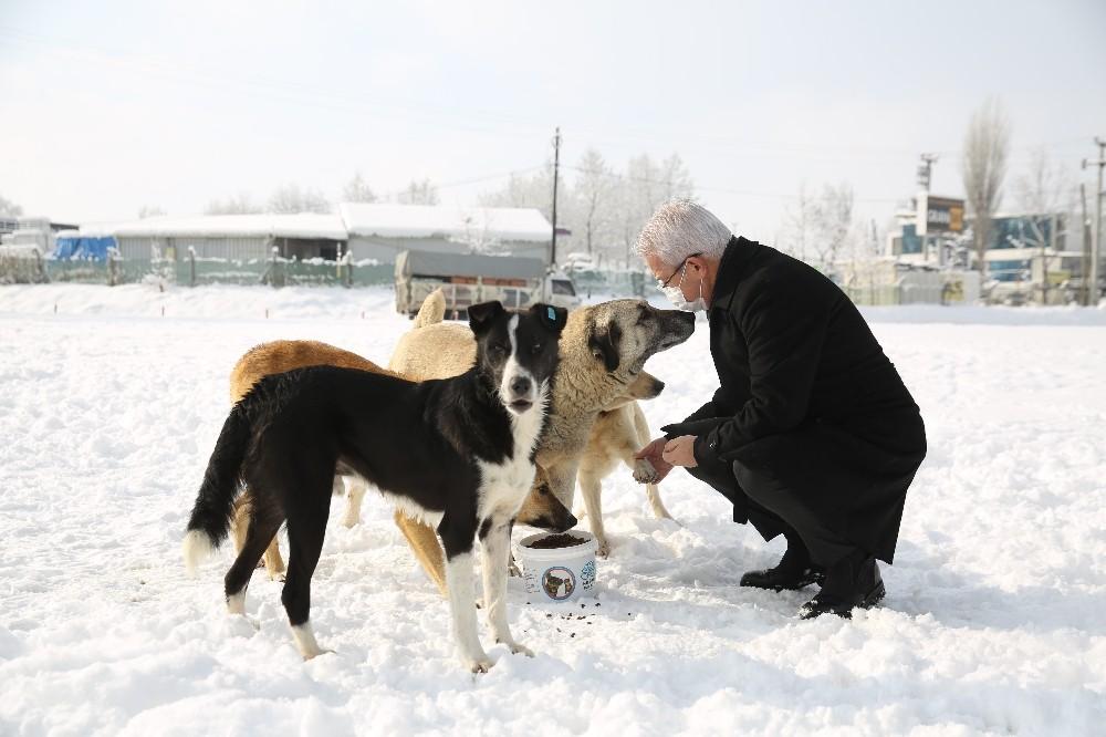 Soğuk havalarda sokak hayvanlarına Nilüfer Belediyesi sahip çıkıyor
