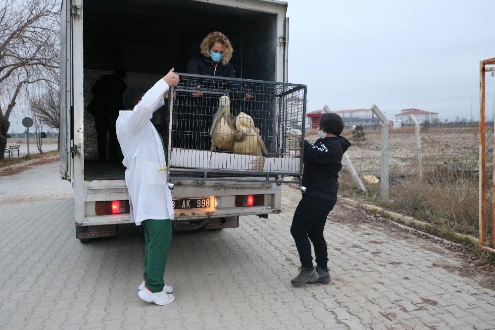 Tedavisi ve rehabilitasyonu tamamlanan 9 yaban hayvanı Ormanya Doğal Yaşam Parkına yolcu edildi