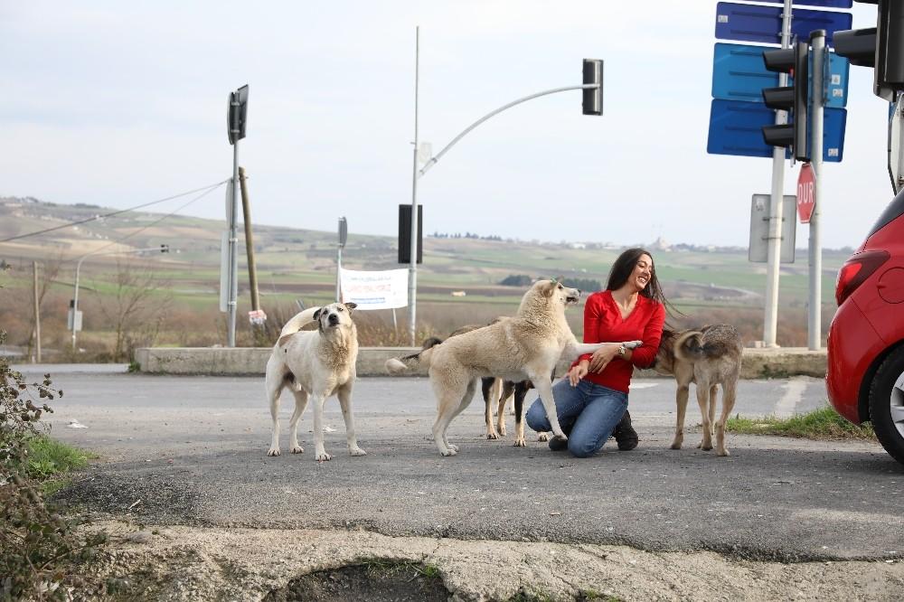 THY'de görevli kabin memurundan sokak hayvanlarına yardım