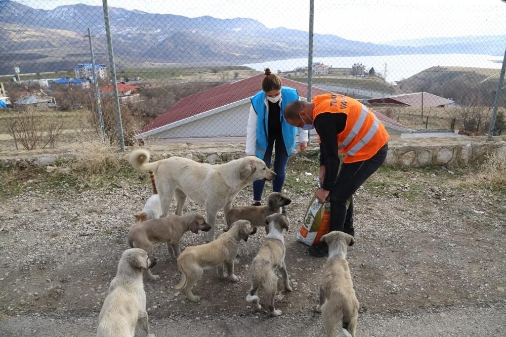 Tunceli'de sokak hayvanları için vefa ekibi görevde