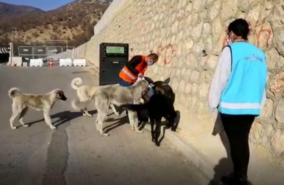 Tunceli'de sokak hayvanlarını unutmuyor