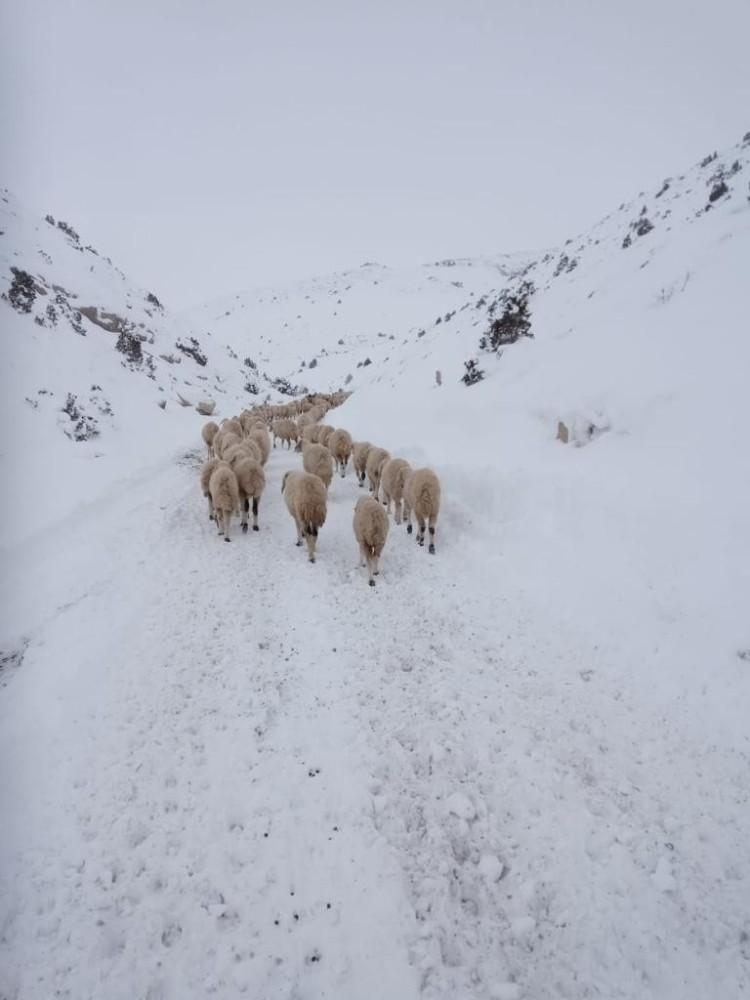 Yaylada mahsur kalan 4 çoban ve 2 bin küçükbaş hayvan kurtarıldı