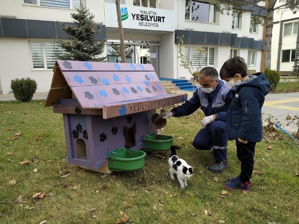 Yeşilyurt'ta sokak hayvanları için Kedi ve Köpek Evler Projesi
